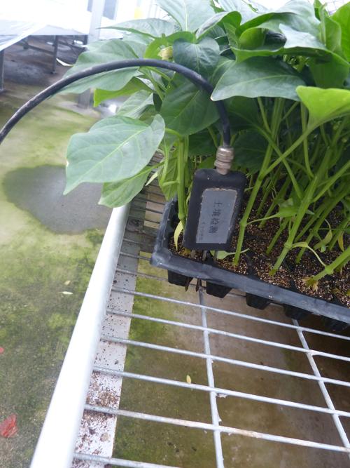 网系统-土壤湿度传感器