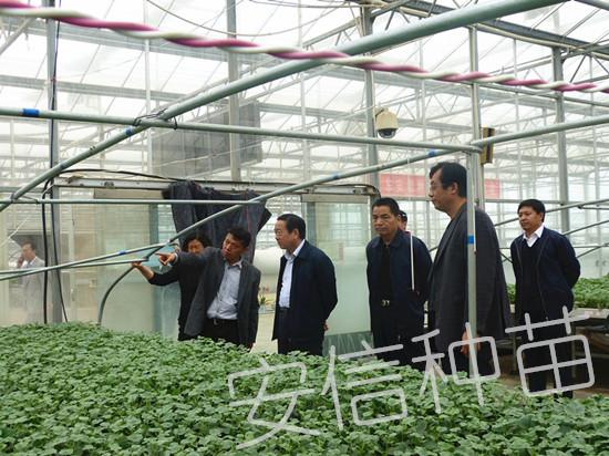 安信种苗实用新型专利——苗床二级拱棚
