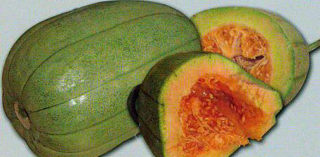 【山东】甜瓜苗孕妇蜜,让好品种致富引领之路芝麻用橄榄油有效吗
