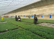 淄博市高青科协农业考察团参观安信辣椒苗基地