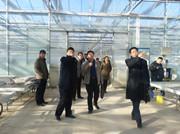 山东省农业厅信息处领导视察安信甜瓜苗基地工作