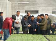 韩国农水产大学一行现场访问安信黄瓜苗基地