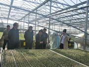 山东省农业厅果菜产业验收小组到安信种苗检查指导工作