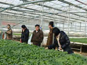 济南市农业局植保站到安信甜瓜苗基地检查防疫工作
