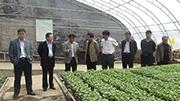 沂南县领导一行到安信番茄苗基地参观考察