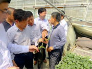 江西省农业厅副厅长程关怀一行莅临安信种苗基地