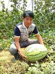 [山东]安信种苗60斤大西瓜新鲜出炉!