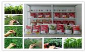 【安信种苗】一个能让您省心放心的蔬菜种苗育苗专家