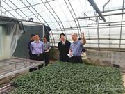 中国农技协会调研安信种苗