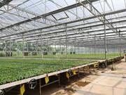 蔬菜种苗定植高峰期遇上连阴多雨,该如何应对?